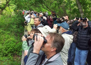 Vogels kijken met verrekijker